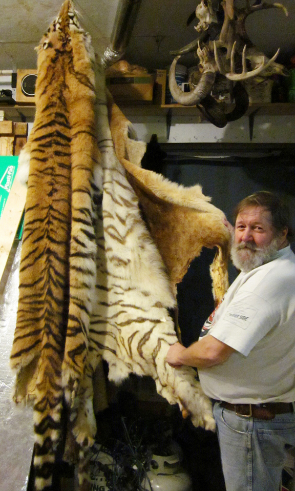 John Wesselink with pelts he has acquired over the years  (left) tiger, white tiger, and Lion in his right hand. Willa Wick photo