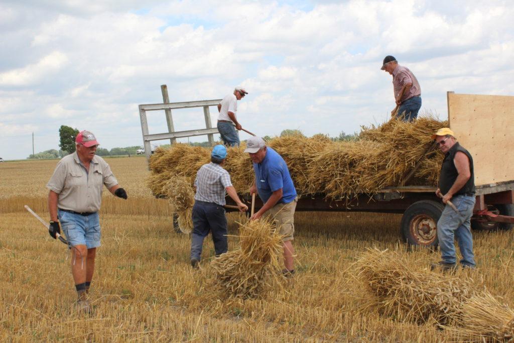 Seniors' IPM Wheat Harvest